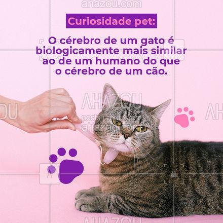 Humanos e gatos, têm uma região idêntica no cérebro responsável pelas emoções.???  #AhazouPet #curiosidade #curiosidadepet #pet #petsofinstagram #petlovers #gato #gatos #cerebro