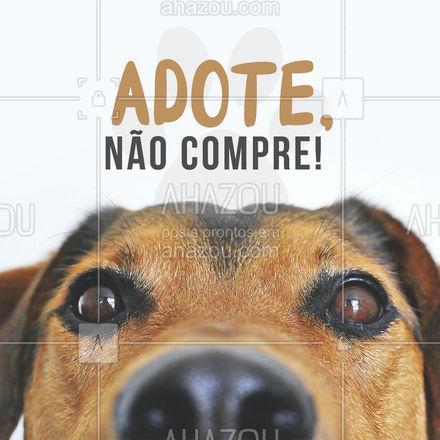 Deixe a vida de um animalzinho mais colorida, adote já!????  #AhazouPet #adoção #cachorros # #dogs #petlovers #cats