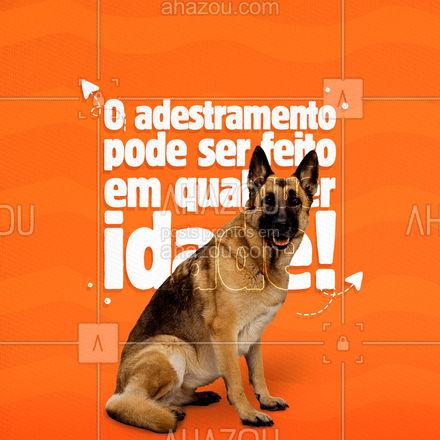 Precisa de ajuda para educar seu pet adulto? Conte conosco, temos horários disponíveis para deixar seu amiguinho mais obediente! ?? #AhazouPet #doglover #adestramento #aulas #horarios #dog  #doglover