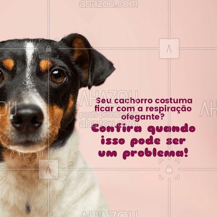 Em alguns casos a respiração ofegante pode ser um sinal de que seu cachorro precisa de ajuda. Fique atento se a respiração ofegante do seu cachorro está acompanhado desses sintomas. Caso esse seja o caso do seu pet, procure uma clínica veterinária!??  #carrosselahz #AhazouPet  #medicinaveterinaria #veterinario #petvet #clinicaveterinaria #veterinary #vetpet #veterinaria #vet