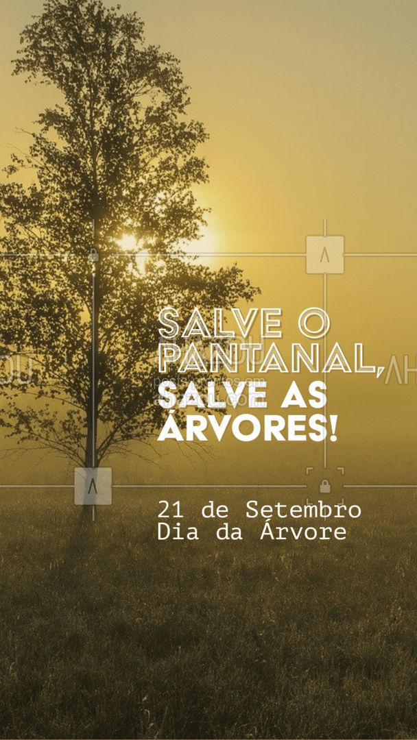 É hora de sermos cada dia mais conscientes e preservar a natureza, as árvores o pantanal! Vamos todos juntos lutar pelo meio ambiente. ? #Pantanal #DiadaArvore #ahazou #Natureza #MeioAmbiente #Arvores