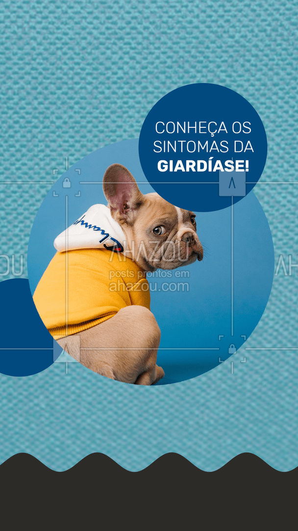 A Giardíase tem como sintomas: - Vômito; - Diarreia; - Dor estomacal; - Presença de sangue nas fezes. Fique de olho! #AhazouPet #giardia #giardiase #caes #veterinario  #petvet  #clinicaveterinaria