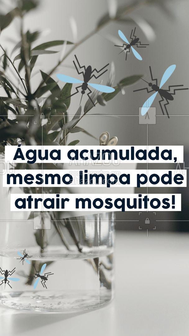 Quer evitar o aparecimento de mosquitos? Siga essa dica: Não deixe água acumulada em ralos, piscinas, calhas, vasos e pneus. Mesmo que a água esteja limpa, se estiver parada pode ser um criadouro para mosquitos. #AhazouServiços #mosquitos #pragas #controledepragas #águaparada #comoevitar #dicas