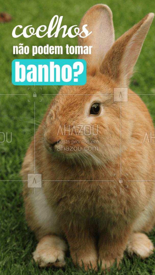 Esses orelhudinhos estão cada vez mais presentes nos lares pelo Brasil afora, mas, o que muitos ainda não sabem é que, não é da mesma forma que se cuida de cães e gatos, que se pode cuidar dos coelhinhos. Muitas das pessoas que adotam um coelho possuem essa dúvida em comum, afinal, coelhos podem ou não tomar banho? ???  Resumidamente a resposta é não. Os coelhos em seu habitat natural são considerados presas, e acabam se assustando facilmente, com isso, banhos não são muito recomendados, pois o estresse gerado podem assustá-los e até mesmo levá-los ao óbito.   O recomendável, caso necessário, é limpar os coelhos com um paninho úmido, uma vez que a lavagem normal dos coelhos é realizada por eles mesmos através de lambidas ou outras formas naturais.   #banhoemcoelhos #coelhos #saudadedoscoelhos #dicas #AhazouPet
