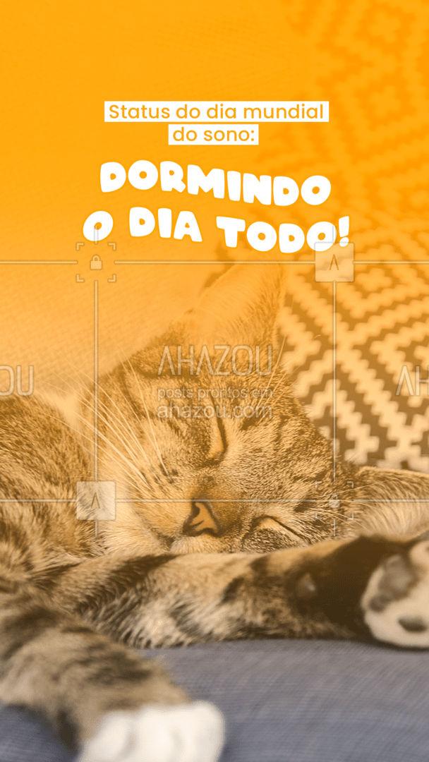 Bora comemorar o dia mundial do sono, com aquele cochilo!??#AhazouPet #cats #dogsofinstagram #petlovers #dogs #petoftheday #sono #engraçado #meme #diadasoneca #ilovepets #AhazouPet