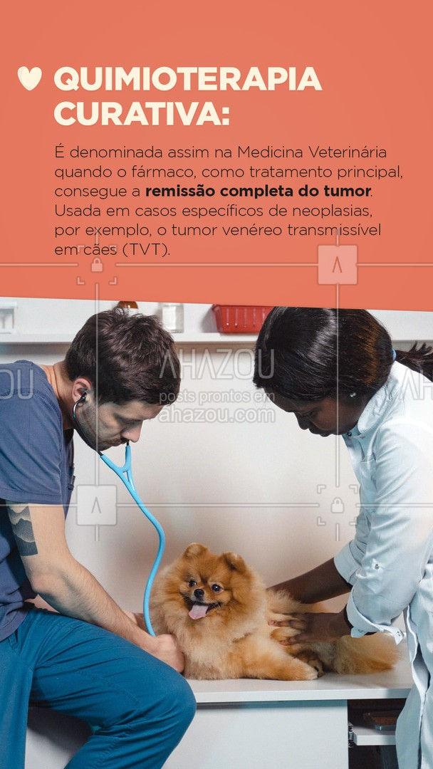 Assim como ocorre com os humanos, o câncer em animais também é uma doença agressiva e que precisa do tratamento correto para preservar a saúde do animal, como a quimioterapia. Arraste para o lado e saiba mais sobre as principais formas desse tratamento. #carrosselahz #AhazouPet  #medicinaveterinaria #medvet