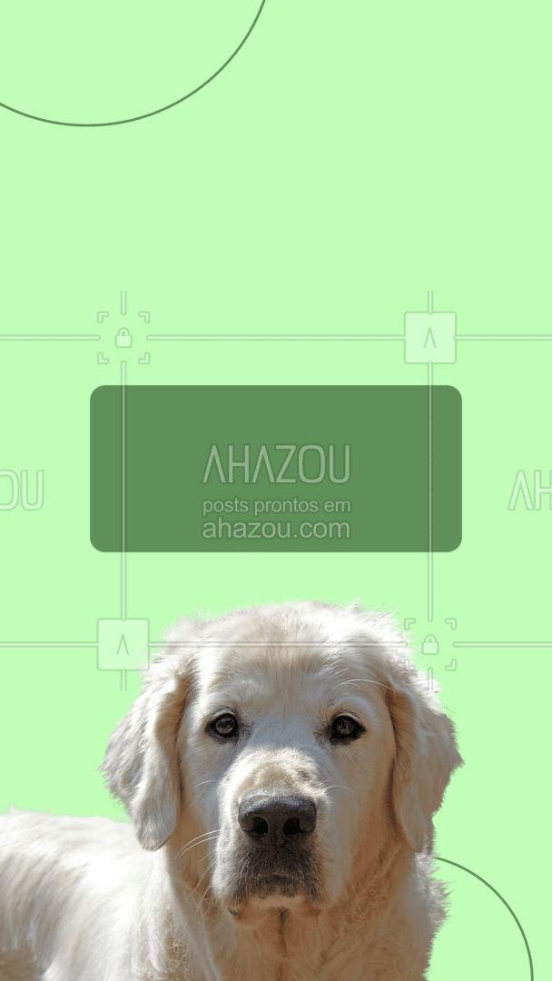 Aqui todos tem seu lugar! Entre em contato para saber mais sobre nossos serviços! #AhazouPet #portegrande  #dogs  #petoftheday  #ilovepets  #petsofinstagram  #petlovers  #dogsofinstagram