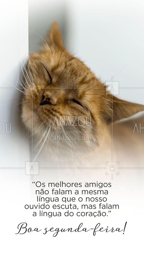 Que sua semana comece com muito amor e carinho dos seus amigos pets! #cats #dogs #petlovers #AhazouPet #motivacional #frases #segundafeira