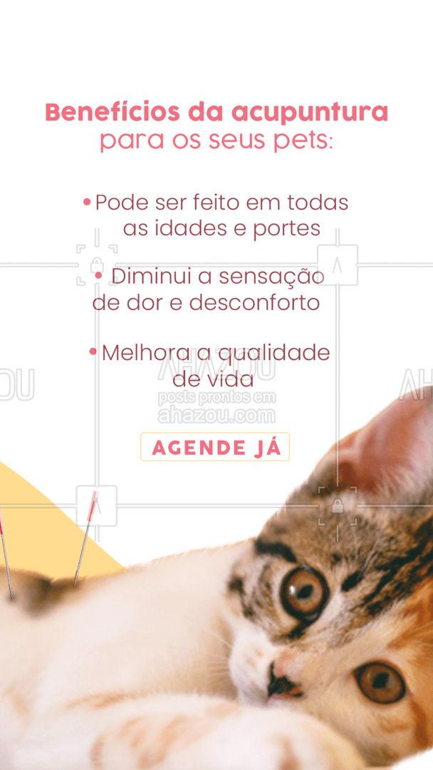 Marque um horário conosco para melhor a qualidade de vida do seu pet ??, pelo nosso ?: xxxxx-xxx. #medvet #veterinario #petvet #AhazouPet #clinicaveterinaria #veterinary #veterinaria #vet #acupunturapet #AhazouPet