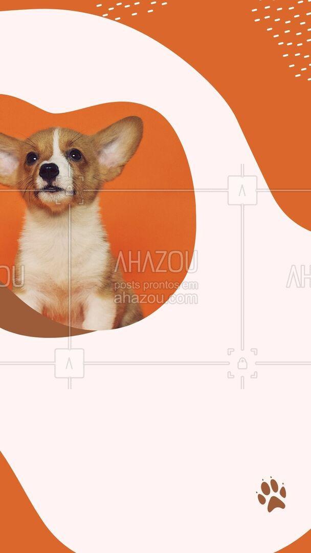 Não importa o tamanho do seu pet, aqui tem desconto especial! Aproveite, entre em contato 📞 (inserir número) e agende um horário! #banhoetosa #tosahigiênica #petshop #AhazouPet #editaveisahz #banho #tosa #promoçao #descontos
