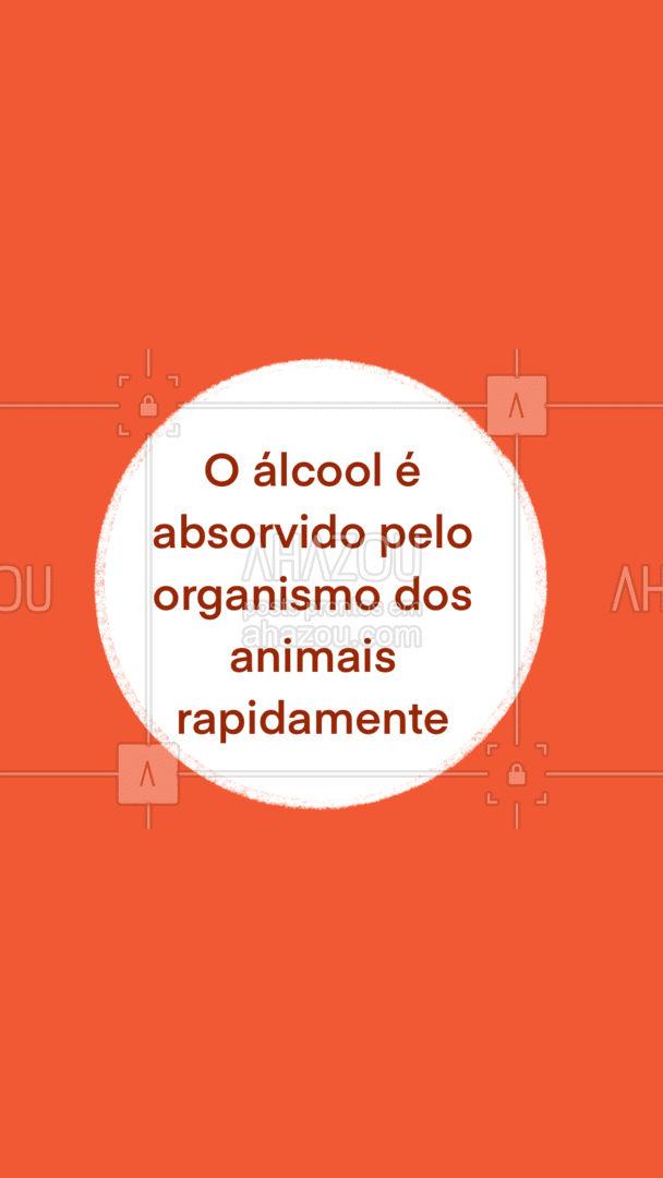 Deixe seus pets longe de bebidas alcoólicas. Aqui te mostraremos o que as bebidas podem causar no seu cãozinho.#carrosselahz #AhazouPet #dogsofinstagram #petlovers #petsofinstagram #ilovepets #petoftheday #dogs #AhazouPet #AhazouPet