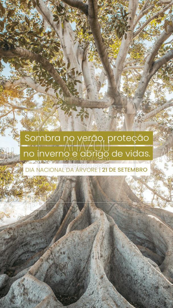 Árvores também são símbolo de esperança de um futuro melhor. Faça a sua parte e preserve!🌳💚 #dianacionaldaárvore #árvores #árvore #natureza #ahazou #motivacional   #motivacionais  #frasesmotivacionais