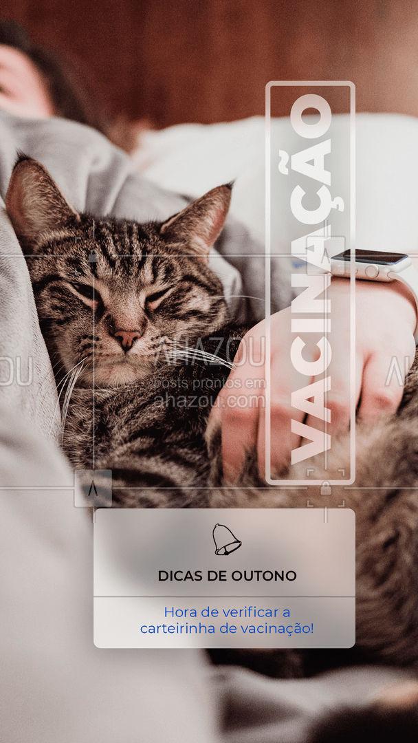 Vacinas em dia para manter a imunidade dos peludinhos! Sempre tenha o acompanhamento do veterinário e siga a carteirinha de vacinação!  #AhazouPet  #cats #ilovepets #petoftheday #dogsofinstagram #petlovers #dogs #petsofinstagram #outono