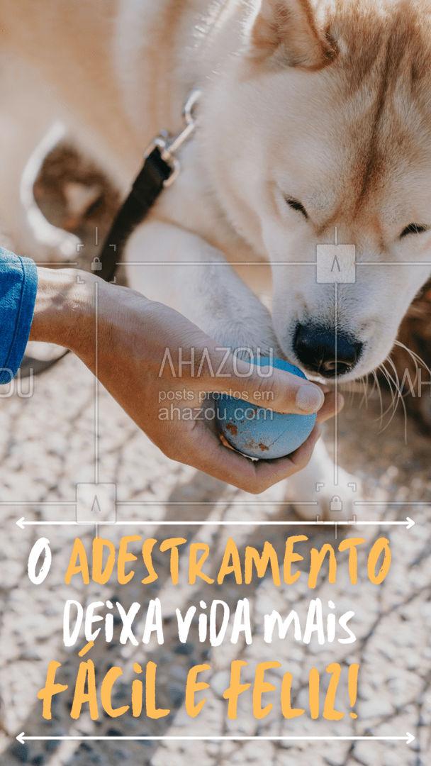 O adestramento cria uma linguagem simples de comunicação entre você e o seu pet, os aproximando ainda mais. ??? Precisa adestrar? Conte conosco, temos horários disponíveis. #AhazouPet  #doglover #adestramento #aulas #horarios #dog  #doglover