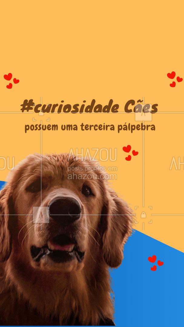 Membrana nictitante é o nome da terceira pálpebra dos cães. É uma cartilagem em forma de T, que ajuda a limpar os olhos do pet, removendo o muco dos globos oculares. Também é importante para a produção de lágrimas e lubrificação dos olhos caninos. Você sabia disso?🐶😮  #AhazouPet #curiosidade #curiosidadepet #pet #petsofinstagram #petlovers #cachorros #cães #lagrimas #olhos