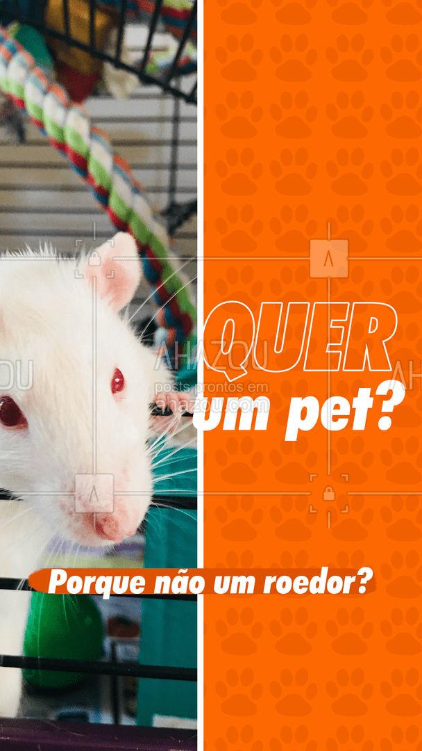 Existem várias espécies de ratos, e você pode escolher o que mais te interessa! É um bichinho extremamente independente e não precisa de tantos cuidados quanto outros animais. Que tal? #Ratos #AhazouPet #Pets