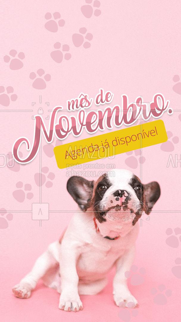Que tal deixar agendado o cuidado necessário que seu pet precisa? #AhazouPet  #petlovers #ilovepets #petoftheday #agendaaberta #novembro