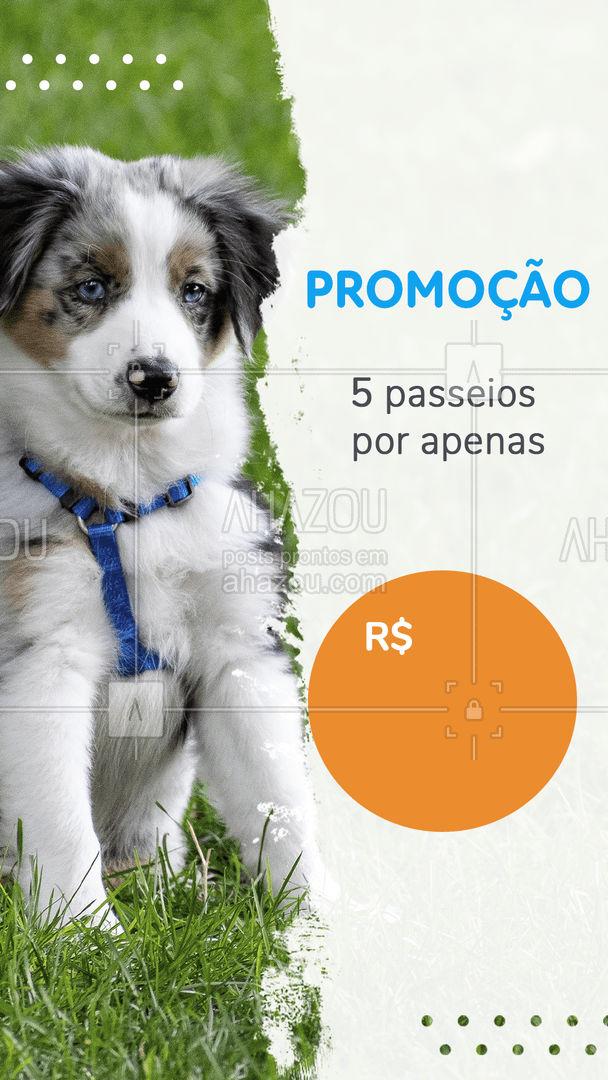 Seu pet vai amar essa promoção!! ?? #passeio #AhazouPet #promoção #dogwalker   #doglover #dogsofinstagram #dogwalkersofinstagram