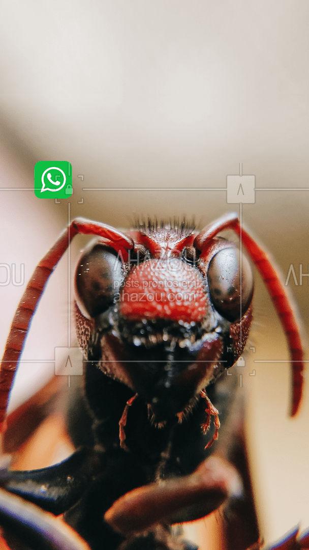 As formigas tomaram conta da sua casa? Não precisa se preocupar, eu vou controlar essa praga! Entre em contato! #dedetizadora #dedetizaçao #dedetizador #AhazouServiços #infestaçao #pragas #insetos #intrusos #desinfecção