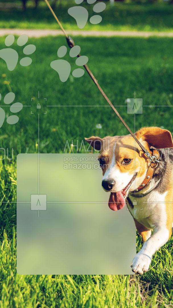 Adquira já o combo promocional por um valor MEGA ESPECIAL!  #AhazouPet #combo #promocao  #dogwalker #dogsitter