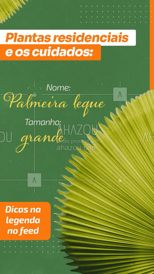 Uma planta sem igual e trará beleza para sua residência. Ela é uma planta com aspecto exótico e escultural, recebeu esse nome devido a sua folha que se abre com um desenho que se assemelha a um leque ou um rabo de pavão. Essas plantas são comuns em regiões mais úmidas, mas conseguiu se adaptar bem as regiões tropicais. Preferem o sol matinal e devem ser regadas ao menos 3 vezes por semana. #dicas #decoração #plantas #AhazouDecora #AhazouArquitetura #homedecor