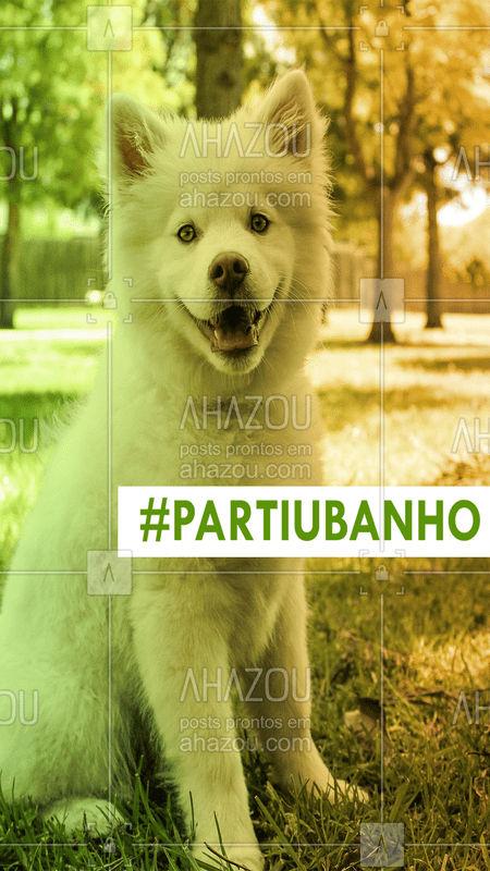 Tá na ⏰ do banho do seu pet? Agende já seu horário e não perca tempo! #banho #pet #banhoetosa #ahazoupet #ahazou #gato #cachorro