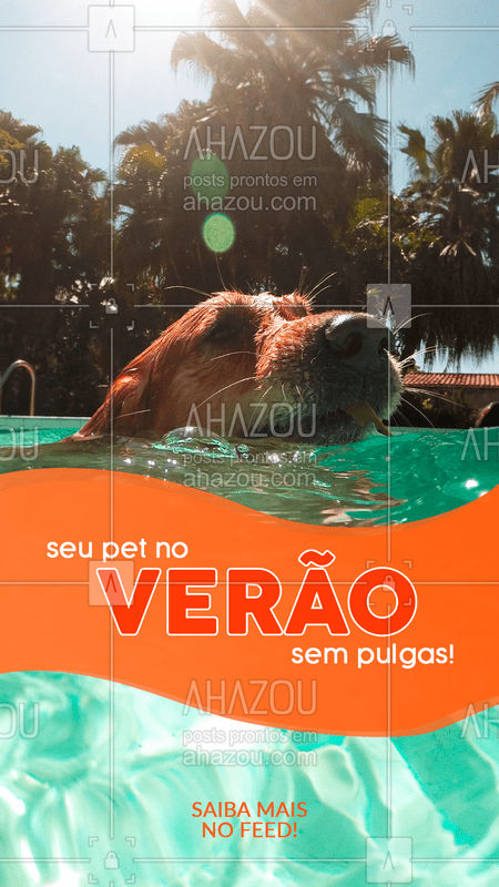 É preciso ficar ligado: o verão é a época perfeita para  ploriferação de pulgas em cães e gatos! Mantenha seu bichinho limpo, assim como é bom higienizar os ambientes que ele frequenta. #pet #ahazou #verão #pulga