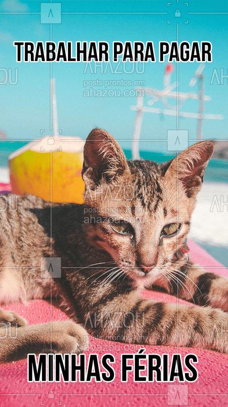 Foco, força e fé!  #ahazou  #ahazoupet  #pet  #meme #petcare  #veterinario #cat #gato
