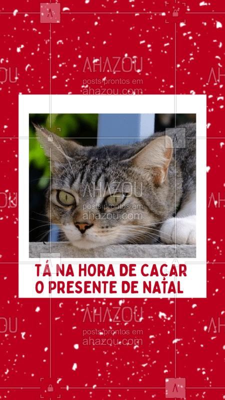Quando a gente não trabalha, tem que ser criativo.  #pet  #petlover  #natal  #fimdeano  #presente  #cat  #gato  #ahazou  #ahazoupet