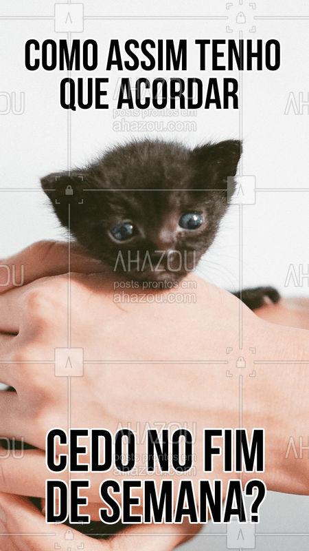 Quando que os dias de glória chegam mesmo?  #pet  #petlover  #petcare  #ahazou  #ahazoupet  #gato  #cat  #catlover