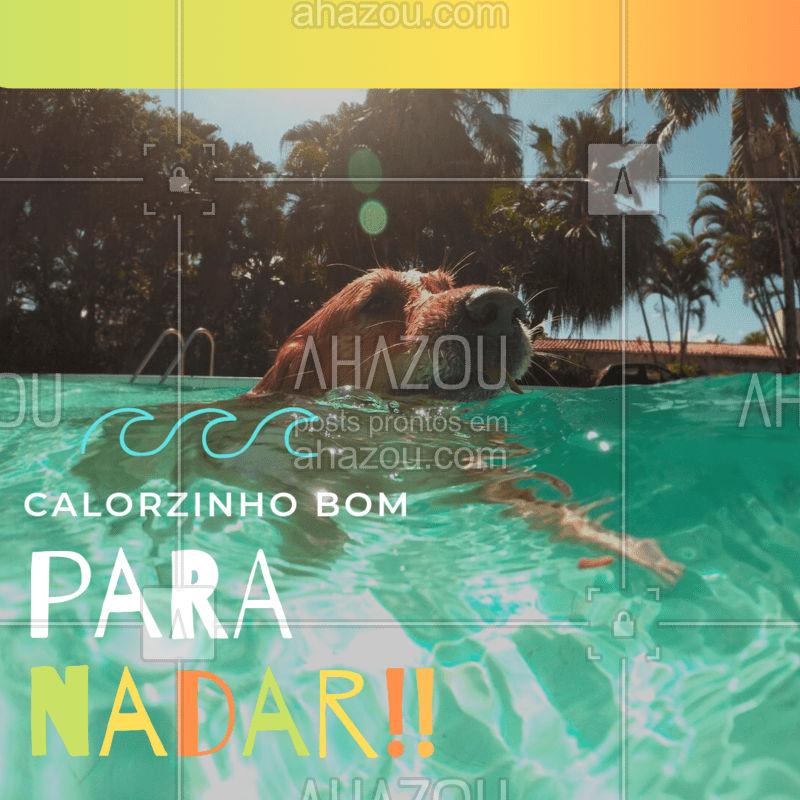 Calozíneo é bom sim. Dentro de uma piscina!!! #calor #pet #ahazou #engraçado