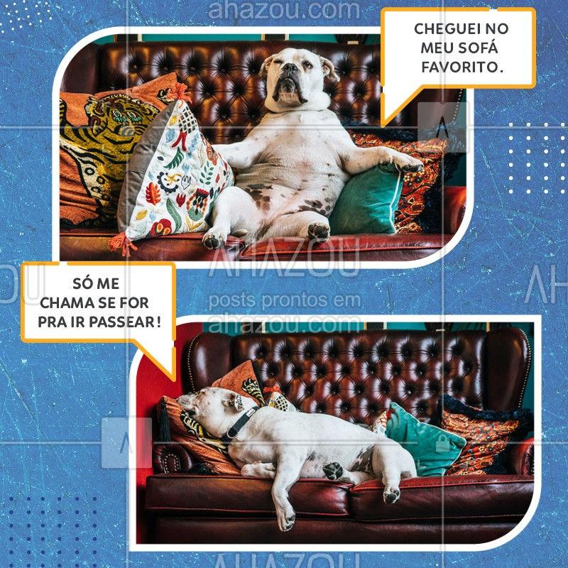 Quando até o seu cachorro sabe que vale a pena acordar pra poder ir passear. Aproveite e venha nos visitar!  #Pet #Ahazou #Cachorro #Dog