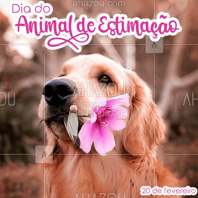 Amor é uma palavra de quatro patas. #pet #diadoanimaldeestimação #animaldeestimação # gato #cachorro #ahazoupet