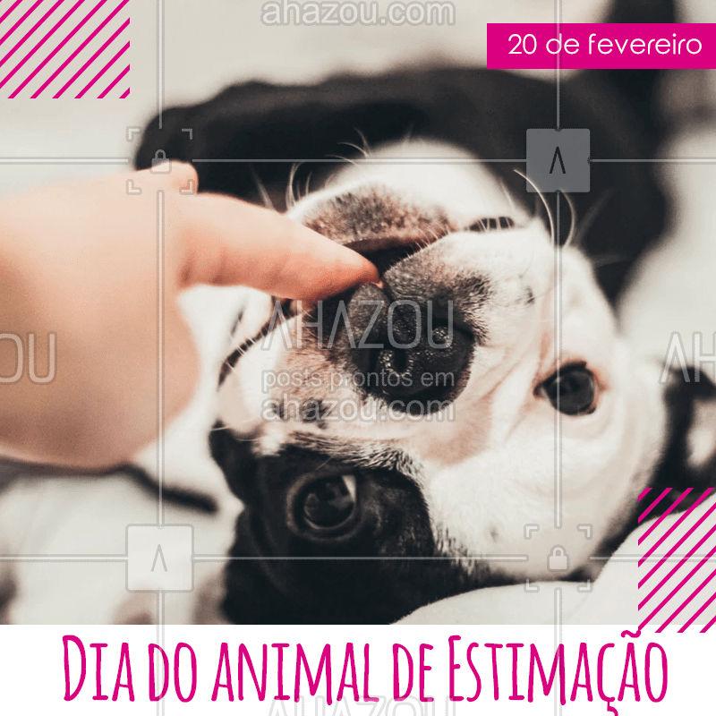 Não existe dia ruim quando você chega em casa e recebe o amor do seu pet. #pet #diadoanimaldeestimação #animaldeestimação # gato #cachorro #ahazoupet