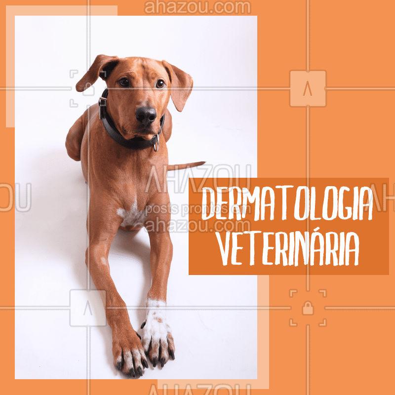 A pele do seu pet precisa de cuidados especiais e um veterinário especializado é de extrema importância! Agende já sua consulta.  #veterinario #ahazoupet #pet