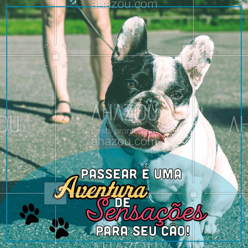 Os passeios não são apenas para exercitar o físico dos cães, mas também trazem muitos outro benefícios, como a socialização com outros cães, exploração do ambiente externo, novas experiências sensoriais, reduz estresse entre outras. Agende já um horário para seu amigo de quatro patas! #AhazouPet  #dogwalkersofinstagram #dogwalk #dogwalker #dogwalkerlife
