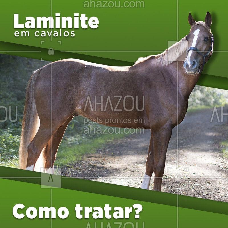 Você sabe como funciona o tratamento da laminite? O tratamento da laminite pode ser realizado por via de tratamento médico veterinário especializado. E em alguns casos com repouso intenso do animal e aplicação de bolsas de gelo na região inflamada. A regulação da alimentação do animal é um passo importante que também pode ajudar no tratamento.  Precisou de tratamento veterinário especializado? Conte com a gente!  ??  #AhazouPet #cavalos #quartoDeMilha #HorseLovers #Horses #AhazouHorses #cavalo #veterinaria #laminite #tratamento