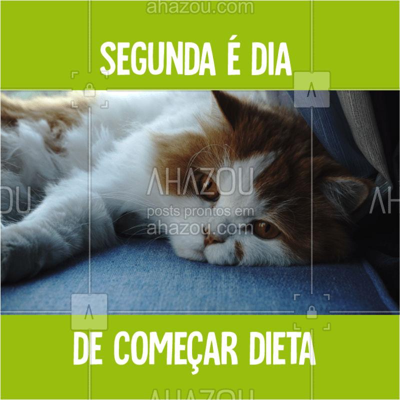 Não desanima, não!  #ahazou  #ahazoupet  #dieta  #segunda  #segundafeira  #meme