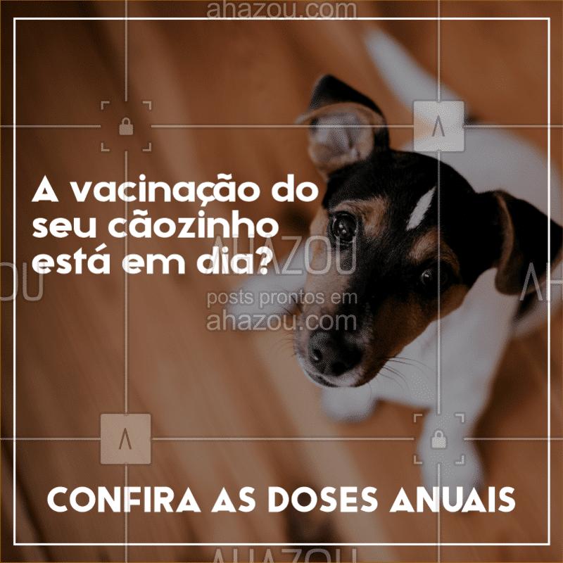 ? Para manter a saúde do seu cãozinho é importante que as doses anuais estejam sempre em dia. Confira abaixo quais vacinas seu pet deve tomar: ✔ V8 ou V10 - previne cinomose, hepatite infecciosa canina, adenovírus canino tipo 2, coronavírus canino, parainfluenza canina, parvovírus canino e leptospirose; ✔ Gripe canina; ✔ Giárdia; ✔ Antirrábica. Tem alguma dose atrasada? Entre em contato que agendamos um horário para você. #veterinário #pet #ahazoupet #cães #vacinação #cuidadoscomseupet #calendárioanualdevacinaçao