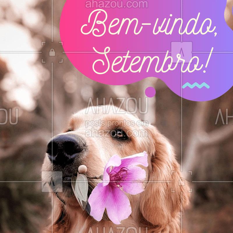 Bem-vindo, mês das flores! Que seja um mês lindo ? #pet #ahazoupet #setembro