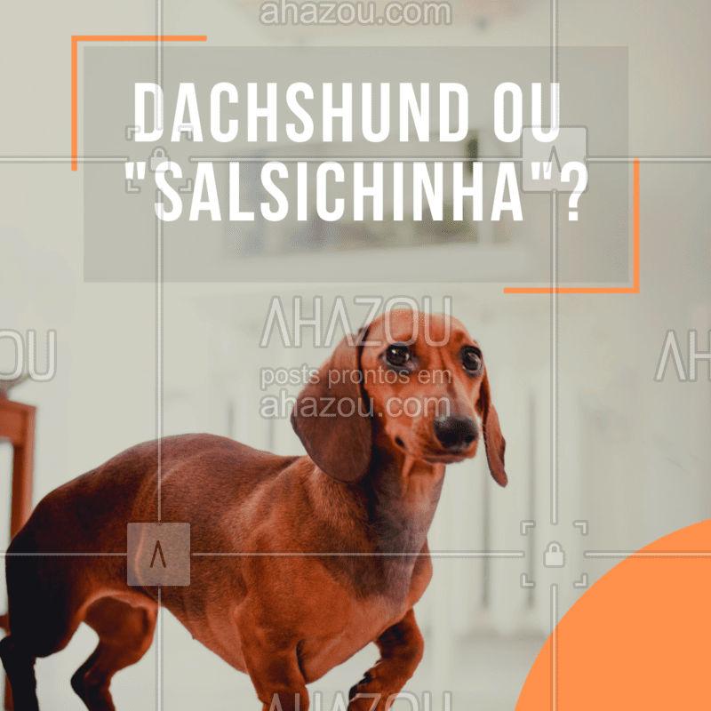 Você sabia que o nome dessa raça apelidada de salsicha pelo seu formato de corpo esticado, na verdade, é Dachshund? Essa mutação genética é chamada de hipocondroplasia, quando as extremidades do corpo são menores que o resto. É uma raça de cão corajoso, curioso e está sempre em busca de aventuras! Deve-se tomar cuidados com o sobrepeso, para não causar dores na coluna. #dachshund #ahazou #cachorro #salsichinha