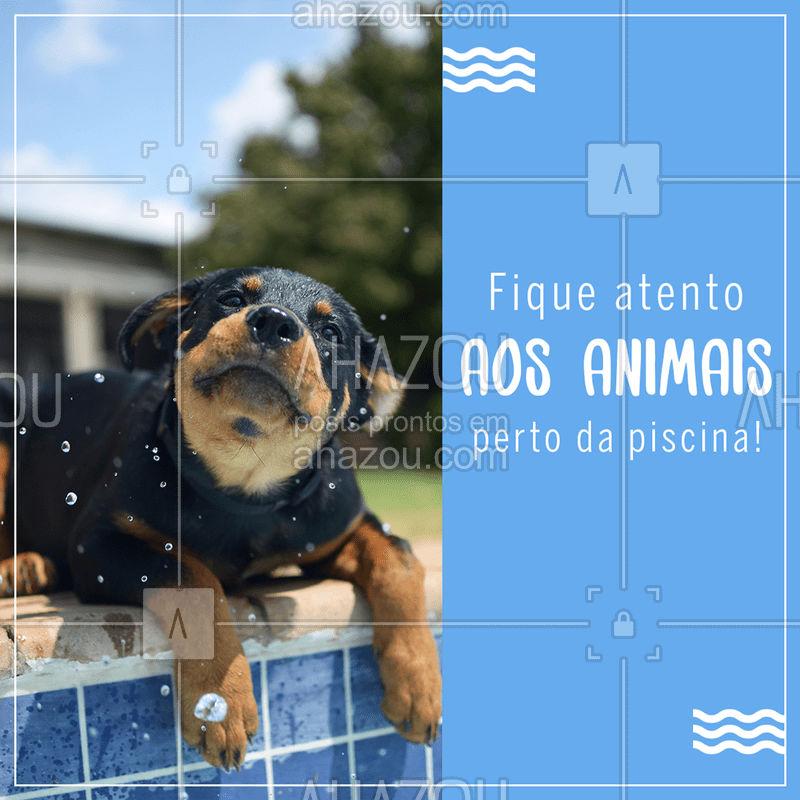Saber onde e o que seu #pet está fazendo é o primeiro passo para garantir a segurança deles perto de ambientes com água.  ?☀️? #petlover  #petcare  #veterinario  #ahazou #cachorro  #dog  #gato  #cat  #verao  #piscina #summer