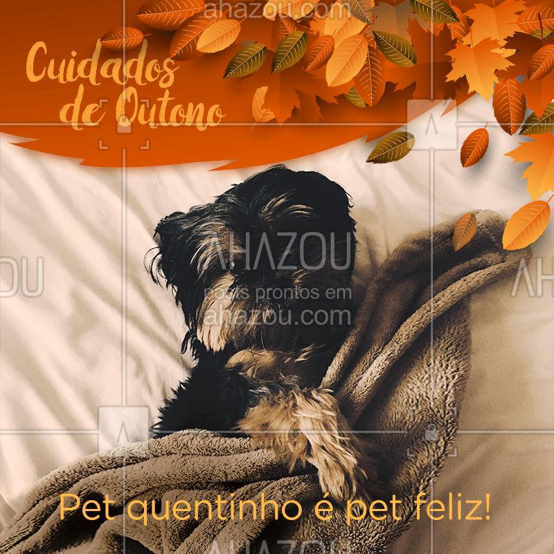 É importante deixar os cães e gatos sempre bem aquecidos, pois apesar de possuírem pelos, muitas vezes ainda podem sentir frio. Você pode deixar cobertores e mantas nos locais onde eles dormem e, se tiverem costume, podem usar roupinha! #pet #outono #ahazoupet #cuidados #petlover