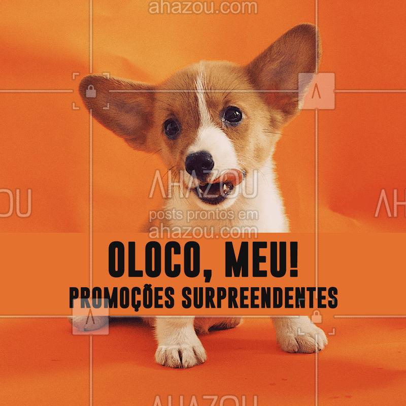 Não vai perder nossas promos né? ? Se vira nos trinta e aproveite! #pet #ahazoupet #promoçao #petshop #veterinario #animais