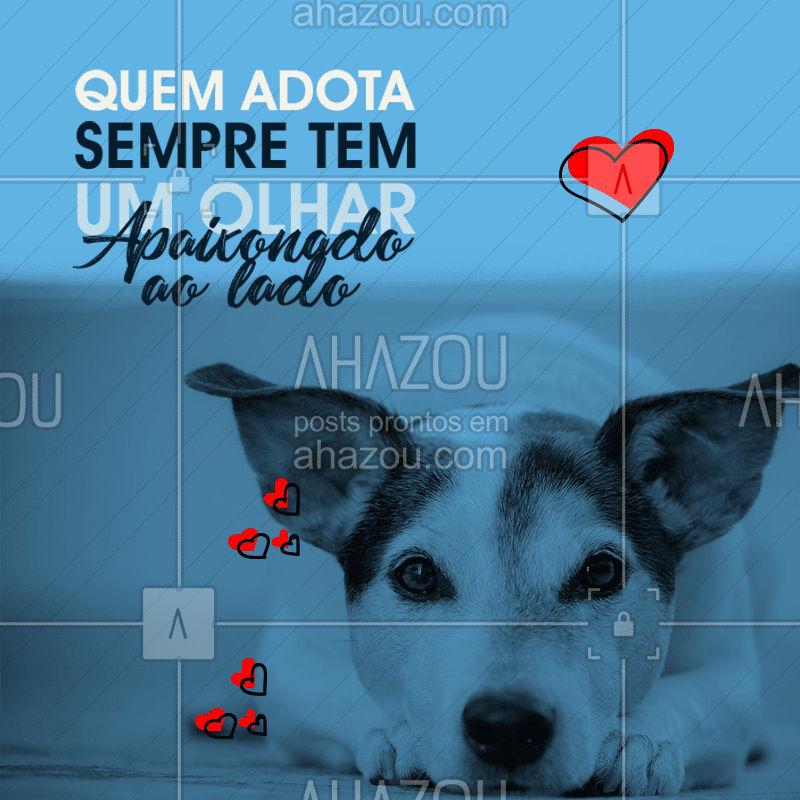 Adotar é tudo de bom né? todos os dias seu pet se apaixona mais por você ???  #pet #adotar #cachorro #gato #animais #amor #ahazou #cuidado