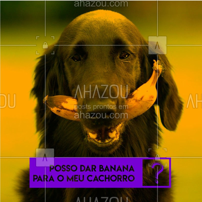Em pequenas quantidades, a banana é sim um alimento que podemos dar para os nossos cachorros. Essa fruta ajuda no bom funcionamento do intestino, e é uma ótima fonte de energia. ?? #dog #banana #ahazoupet #alimentacao