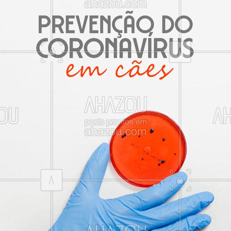 Em cães, já foram encontradas duas espécies de coronavírus: o entérico canino (CCoV) e o respiratório canino (CRCoV). Quando o cão é filhote, idoso ou possui imunossupressão, é preciso um cuidado maior. Um grande risco está ainda, em qualquer faixa etária, quando existem outras infecções associadas.   ⚠️ Para a prevenção, o mais indicado é a vacinação anual. A partir de uma pesquisa realizada pelo Fundador da Petlove, Marcio Waldman, foi possível  que a vacina contra o coronavírus entérico fosse incluída nas opções múltiplas (V8, V10, V11 e V12) em nosso País.  Fonte: https://www.petlove.com.br/dicas/entenda-o-coronavirus-em-animais   #coronavirus #ahazoupet #pets #pet
