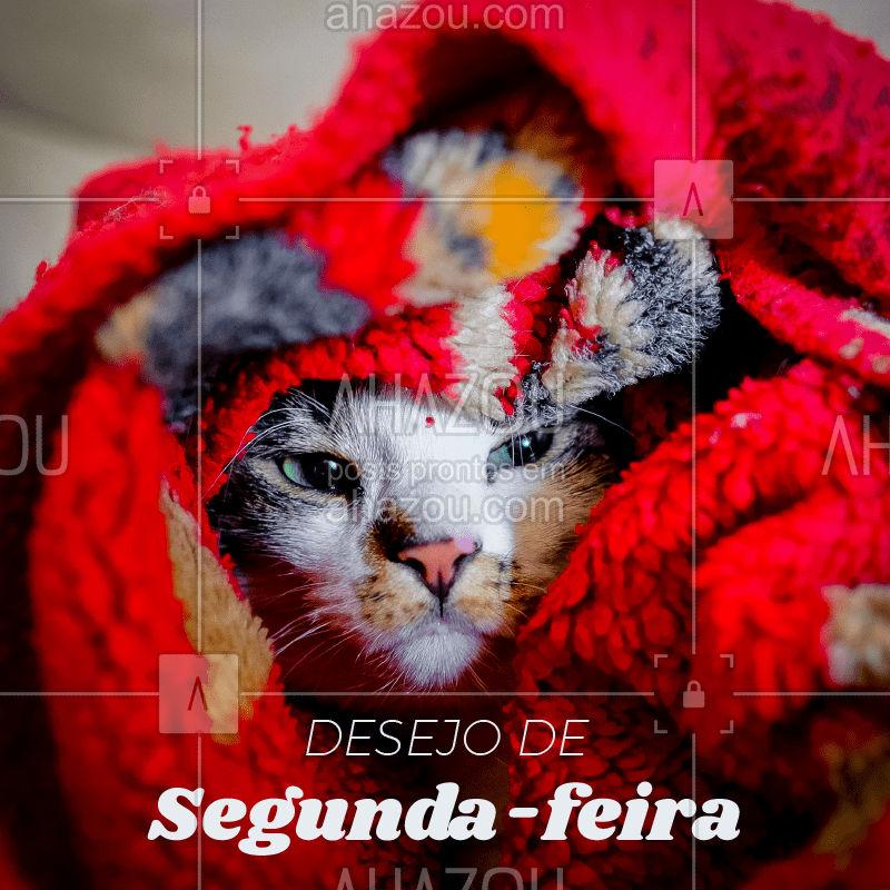 Não tá fácil pra ninguém...   #ahazou  #ahazoupet   #cat  #gato  #segundafeira  #segunda