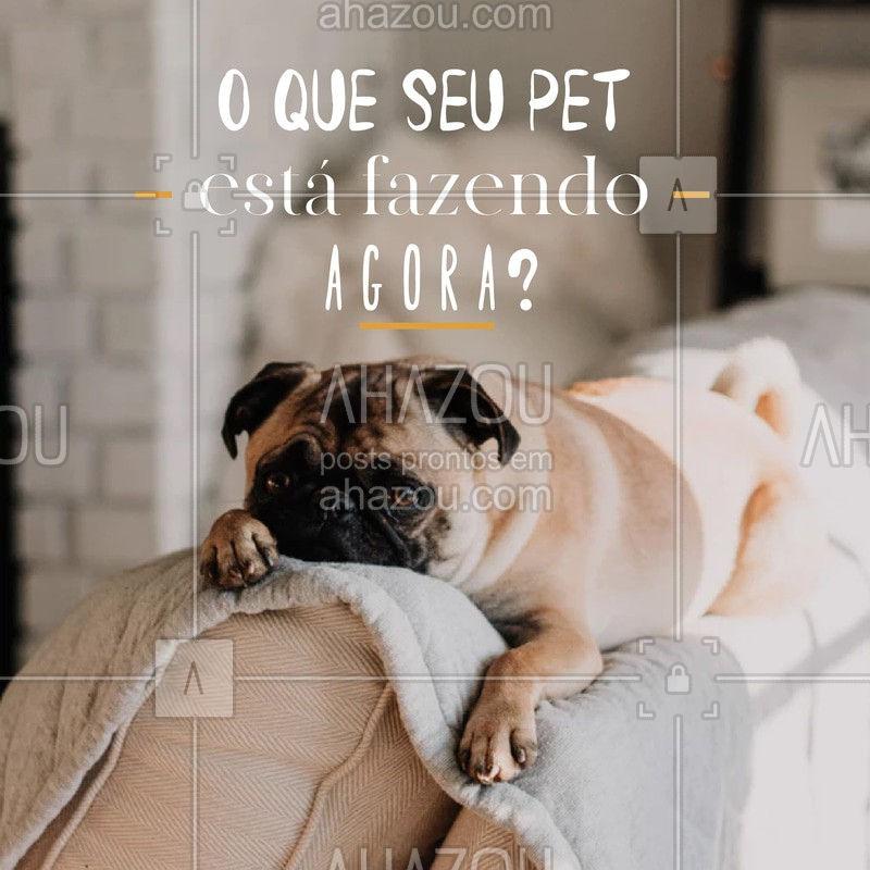 E aí? Seu pet está descansando, nanando, comendo..? Responda aqui nos comentários! #pets #ahazou #pet