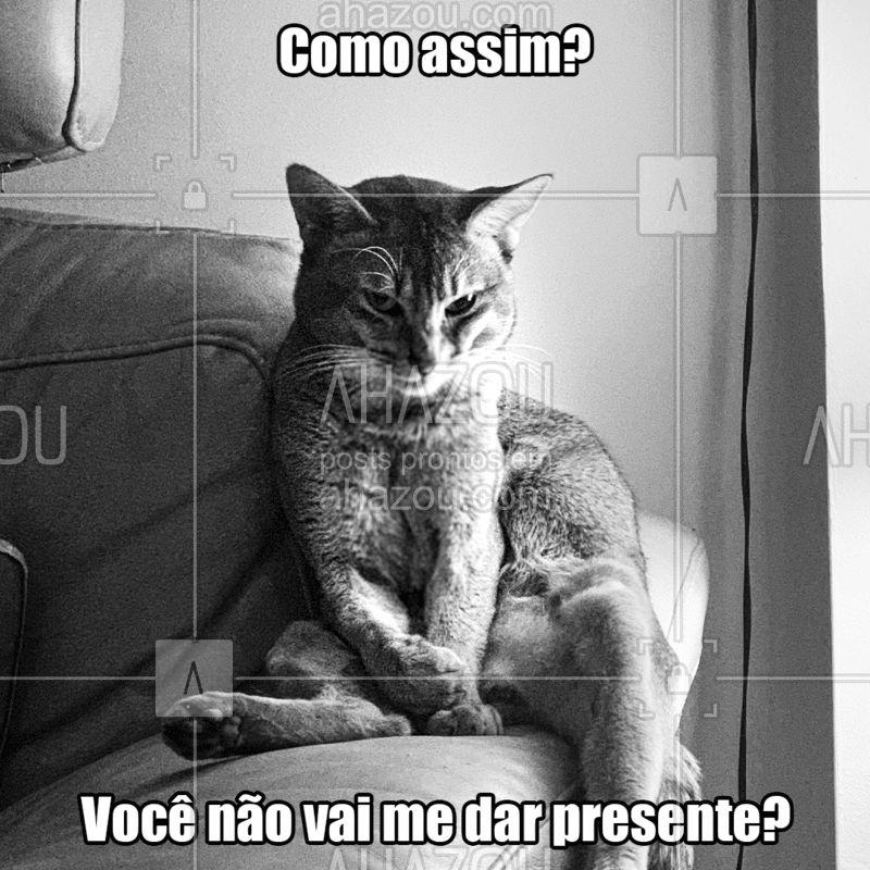 E aí, já comprou todos os presentes da lista?  #ahazou  #ahazoupet  #natal  #fim de ano  #presente  #cat  #gato
